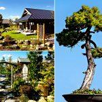 Japoniškas sodas 012