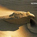Neringa 67