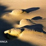 Neringa 68