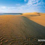 Neringa 8