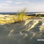 Neringa 21