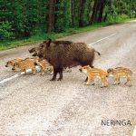 Neringa 37