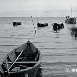 Neringa 41