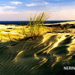 Neringa 021