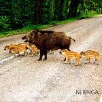 Neringa 037